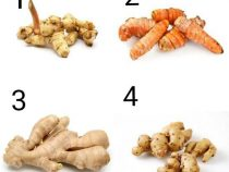 Tips for Planting Your Own Rhizome Plants That Are Useful in the Kitchen